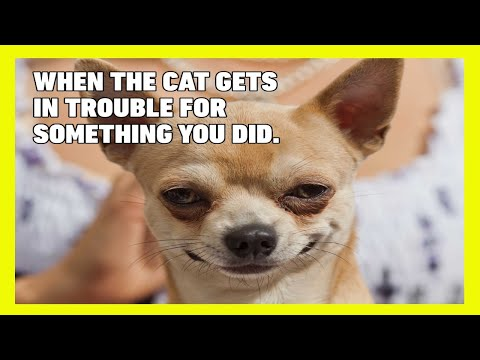 funny-pets-videos-try-not-to-laugh!
