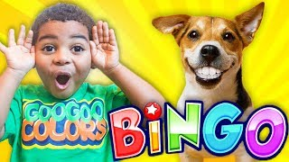 Bingo Song + More Songs With Lyrics