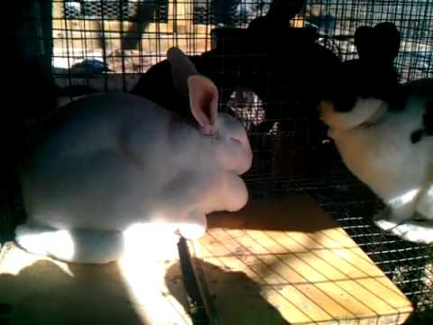 More info on ivermectin and ear mites for rabbits