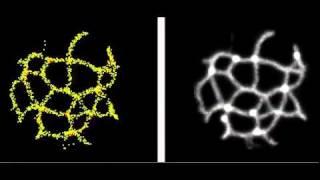 Slime Mold - Particle Model - Sensor angle 22.5