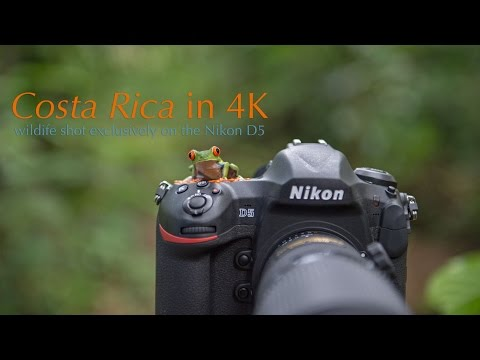 Nikon D5: Costa Rica Wildlife in 4K
