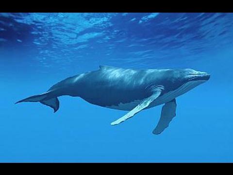 Bahía de Samaná: ruta del amor de las ballenas jorobadas