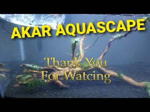 aquascape-akar-sederhana