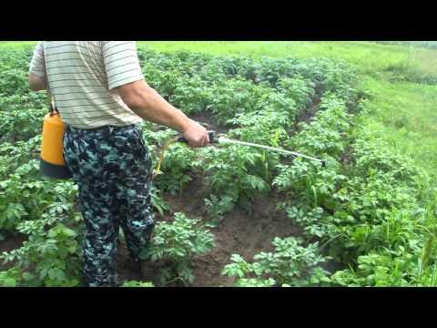 Опрыскивание картошки против колорадского жука - Городской пижон №006