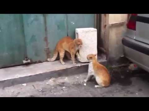 The Best Cat Fights - Brutal and Funny Cat Fights 2015 - Best Cat Videos