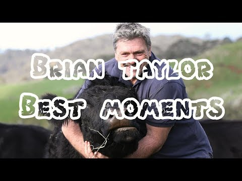 THE BEST OF BRIAN TAYLOR