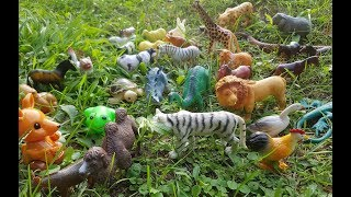 Learn the names of animals Farm animals...Wild Animals in the Forest ...Animal Names & Animal Sounds