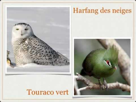 hqdefault - Les vertébrés : Les oiseaux