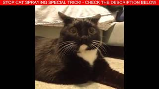 Super Funny Cats Videos Compilation 429 | FUNNY VIDEOS: Funny Cats - ...