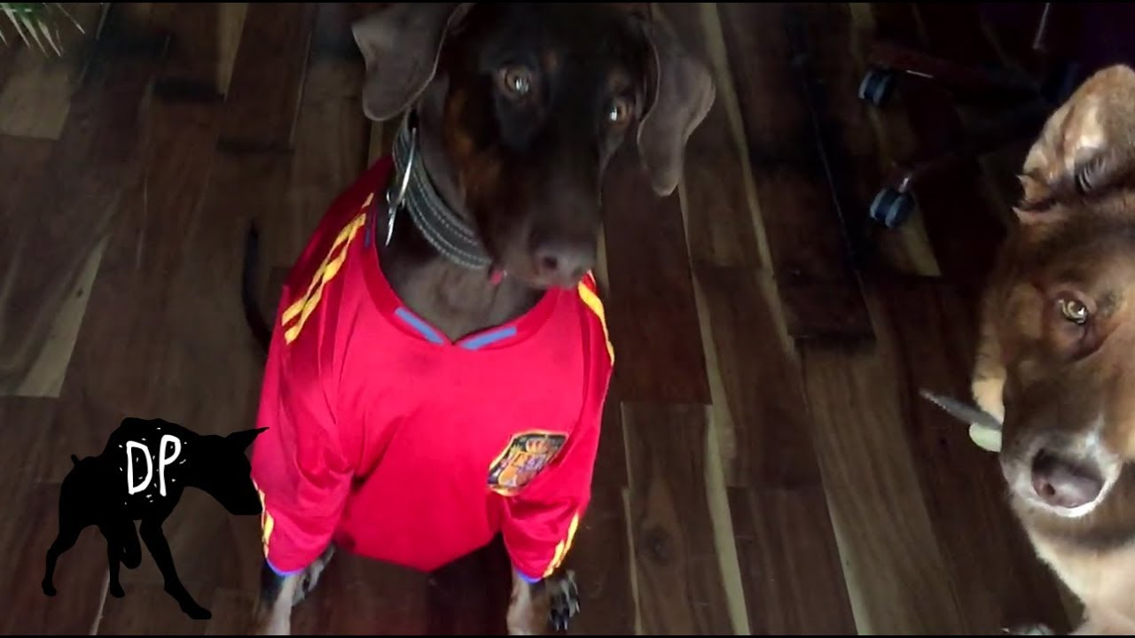 free halloween costumes for large dogs kaia the doberman