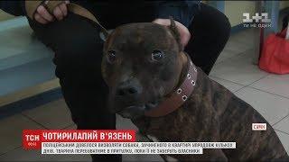 У Сумах поліцейські визволяли собаку, яку зачинили саму в квартирі