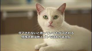 にゃんこシリーズ最終話(大切なメッセージにゃ)