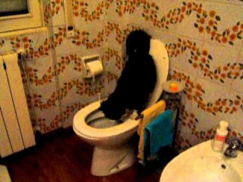 Il gatto che fa la cacca nel water doovi - Cacca nel bagno ...