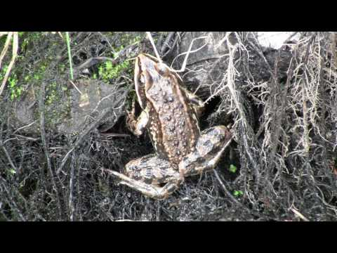 Aquatic Water Organisms, Insects, Fauna, Animals Part 2 of 4 - Nature Ecosystem of Western N America