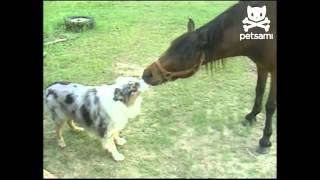 Собака и лошадь целуются.mp4