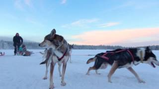 Travelpello tourism video: Husky dog rides and husky excursions in ...