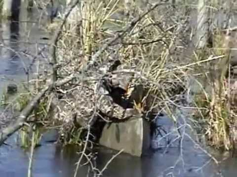 PA Waterfowl Hunting