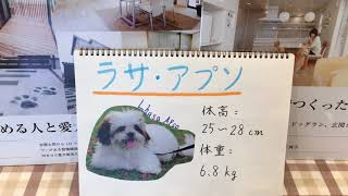 みなさん、こんにちは。セラフ榎本愛犬家住宅です。 今回は、ラサ・アプ...