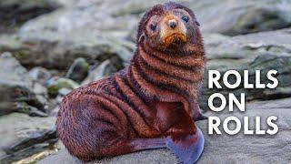 Fur Seals: The Salty Sea Doggos