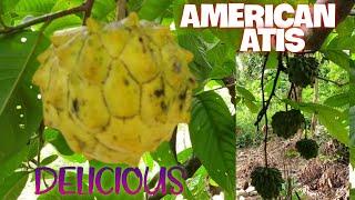 AMERICAN ATIS
