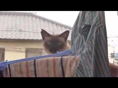 скачать кота паркурщика через торрент - фото 4