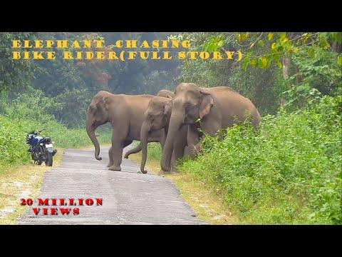 Elephant Chasing  Bike Rider (Full Story)