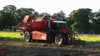 Harvesting Potatoes with Dewulf D3000 Tri-Wheel SP Harvester.