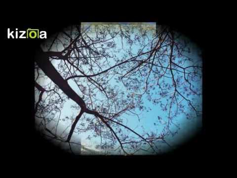 Kizoa Movie e  Maker: ALBERI - Anna Maria Cherchi