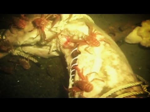 What Happens To DEAD BODIES in the Ocean?