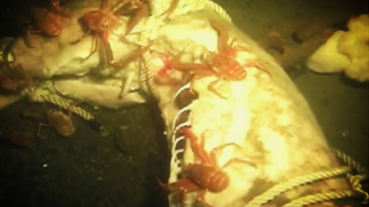 What Happens To Dead Bodies In The Ocean Youtube