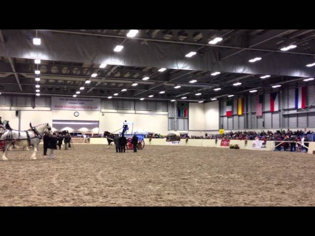 Shire Horse Society Spring Show 2013, Turnouts Championship