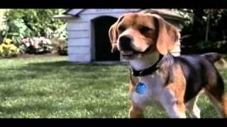 Трейлер Кошки против собак (2001)