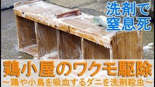 """ワクモ""""(ダニ)は、鶏小屋や飼育ケージに住み着く害虫です。 鶏小屋や..."""