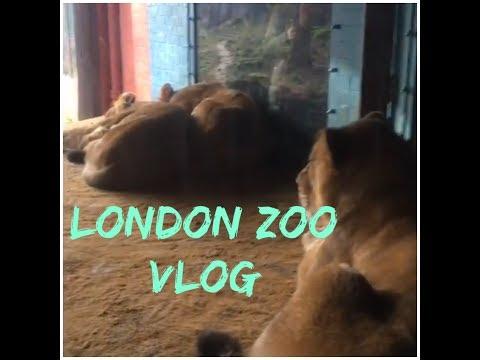 London zoo Vlog