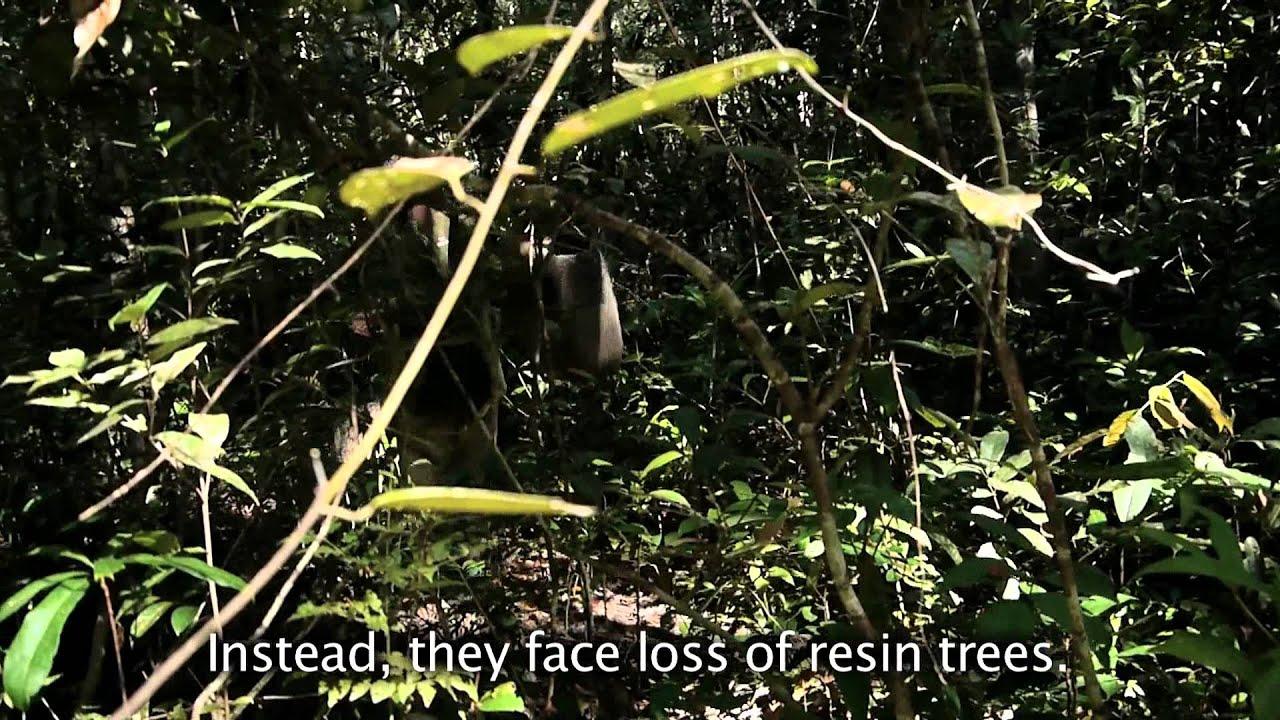 Film in memory of Cambodian logging activist Chut Wutty