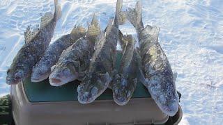 Зимняя рыбалка Кама Лаишево мысы берш на тюльку