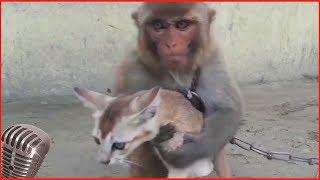 смешные животные и природа 12# лучшие моменты