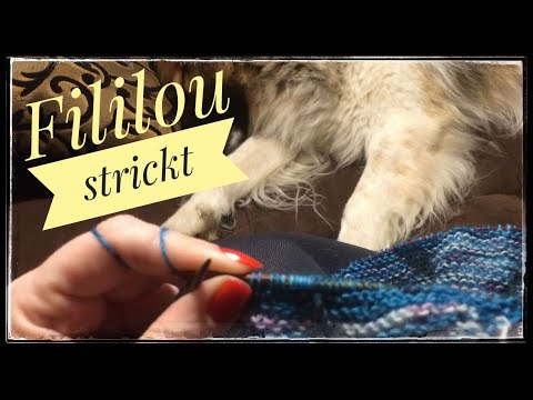 Youtube-Tutorial: #30 lustige Socken und Hundebaby