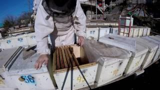 видео Места зимовки клеща и особенности его развития