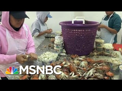 They Voted For Trump As A Jobs Creator, Now Their Businesses Are In Jeopardy | Kasie DC | MSNBC