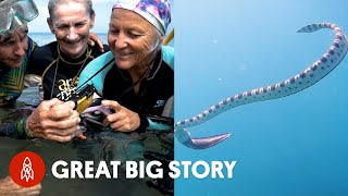 Why These Grandmas Swim With Venomous Sea Snakes