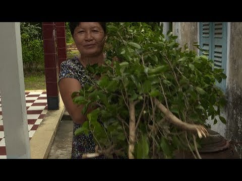 Addressing gender and climate change adaptation in Viet Nam's agriculture sectors