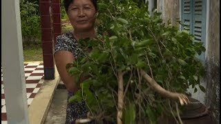 (VIETNAM - March 2018) Addressing gender and climate change adaptation in Viet Nam's agriculture sec
