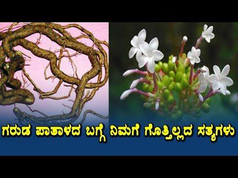 Amazing Benefits Of Sarpagandha Health Secrets Of Ayurveda Herbs