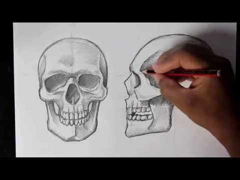 Drawing Human Anatomy Head Proportions How To Draw A Realistic