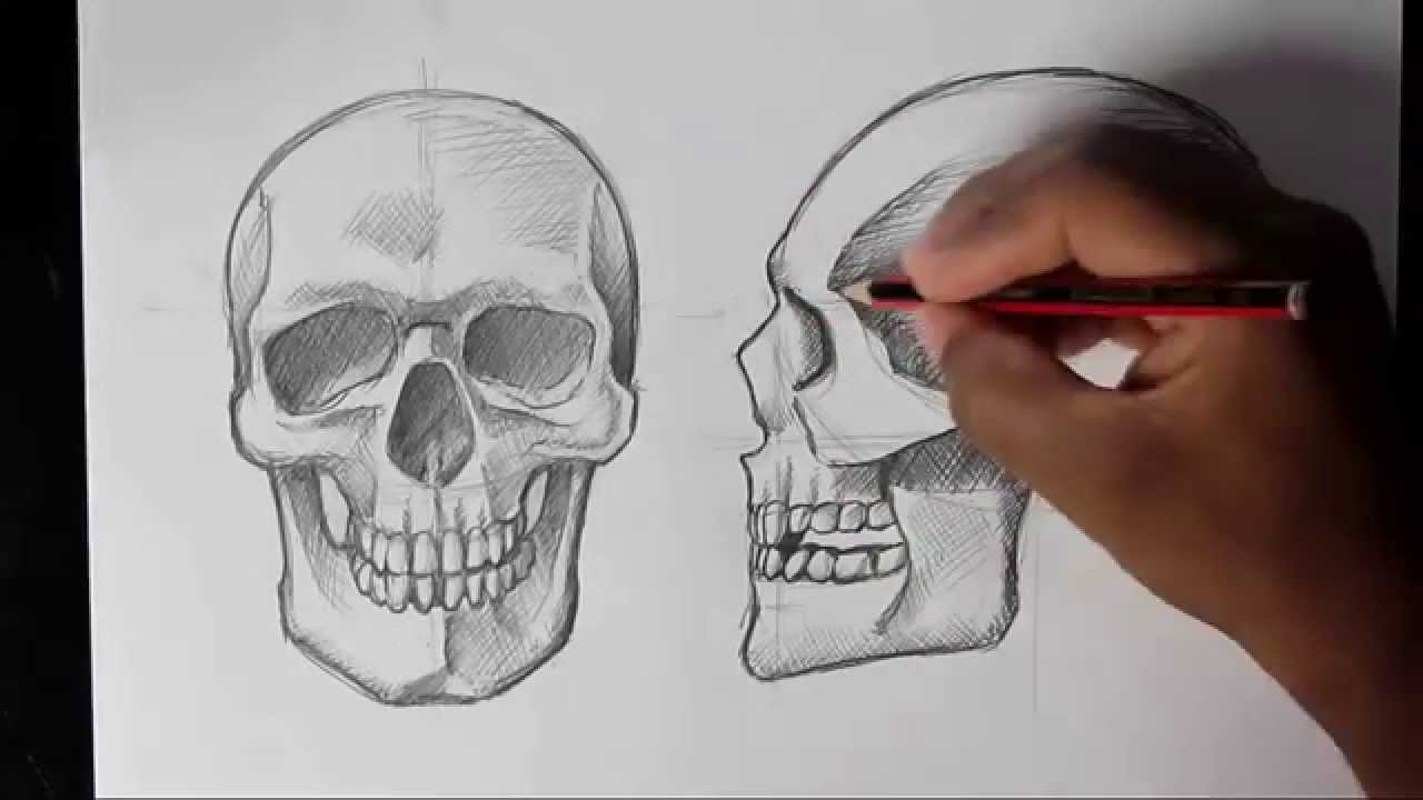 How to Draw Human Skull Front/Profile | Human Anatomy - YouTube