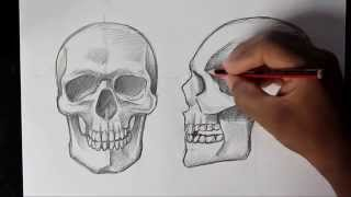 How to Draw Human Skull Front/Profile | Human Anatomy