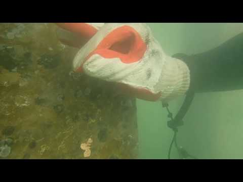 Scuba diving ship propeller cleaning (aftermath) part 1