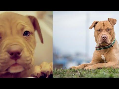انواع الكلاب قبل وبعد