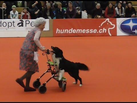 3. Platz - Klasse 3 - Dogdance - Freestyle - Anja & Merlin 'die wilde Oma Hilde' - Winterthur 2015